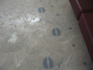 resized_Commercial Floor, Veterinary Clinic.JPG